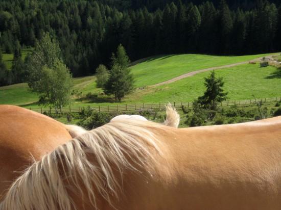 stadlalm cavalli